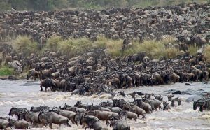 The Great Migration Offer!