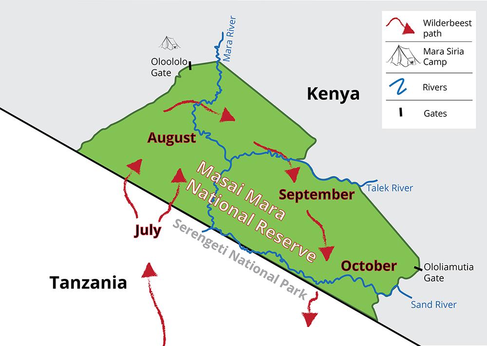 mara migration cycle