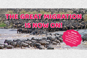 The Great Migration Is Now On! Join Us To Masai Mara.