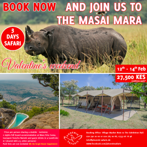 Book With Us Today For Experience Like No Other – Join A Shared Road Package To The Masai Mara ~ 12th – 14th February